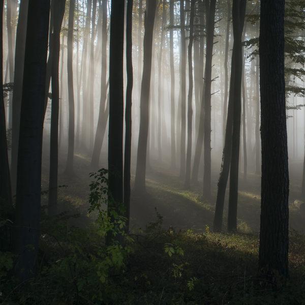 Mraky, mlha, inverze…